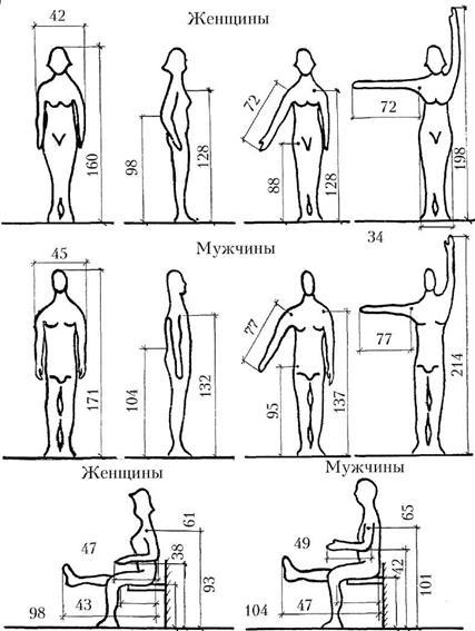 Средние размеры человека (в